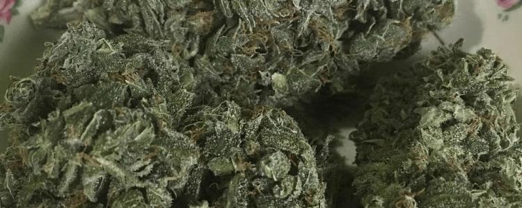 CBD-Oil-Hemp-vs.-Medical-Marijuana-CBD-What-is-the-Difference