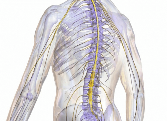 How-Do-You-Qualify-for-a-MMJ-Card-With-a-Damaged-Spinal-Cord