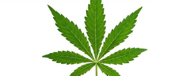 Medical Marijuana - A Life Changer plus Healing Herb