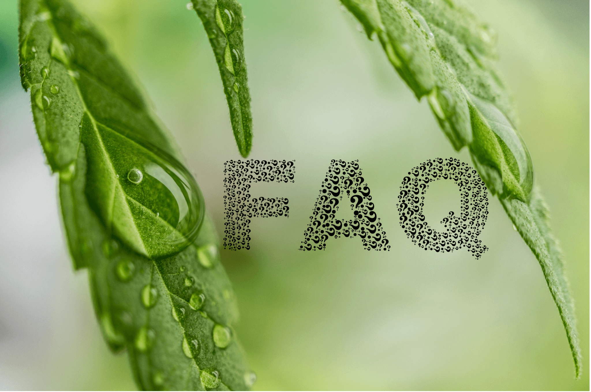 10-FAQs-on-CBD-Oil-Answered-For-You.